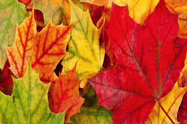 leaf-collection