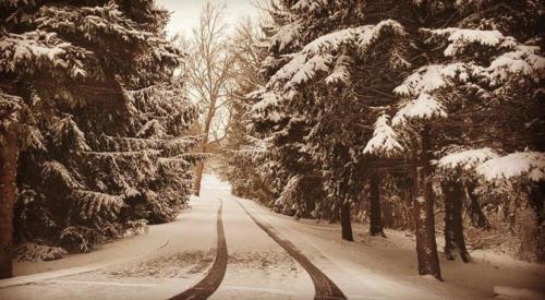 Photo Contest - Winter 2020